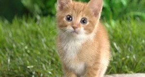 «Non sopravviverà»: il <b>gatto</b> dallo sguardo sorpreso compie oggi 4 anni