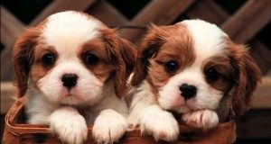 Francia, il centro Curie testa l'olfatto dei <b>cani</b> sui tumori al seno